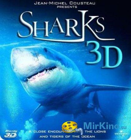 Акулы (2004)